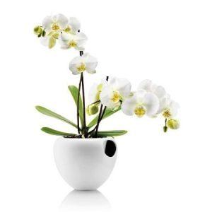 Eva Solo Orkidearuukku