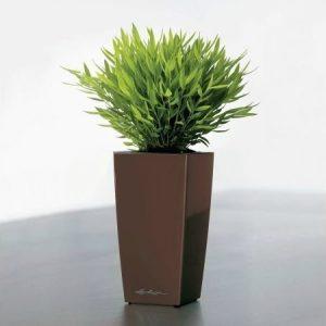 Lechuza Maxi-Cubi altakasteluruukku