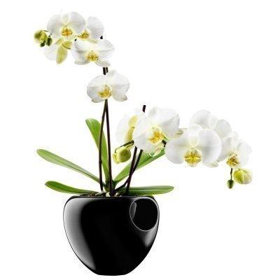 Orkidearuukku musta